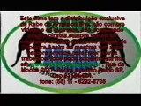 street roda clips from Berim Brasil DVD