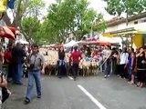 départ du troupeau de moutons en transhumance