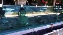 New Animal Funny Videos 2014 House Has 165 Foot Aquarium Fence Funny Videos