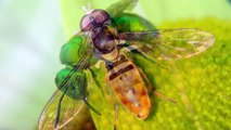 How to Photograph Insects  Bees, Butterflies, Wasps, and Flies Photography Tutorial