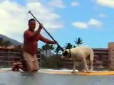 Stand Up Paddle Surf de perros