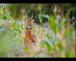 Photographe Nature Animalier Marc Chesneau- Parc Naturel Régional du Vexin