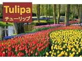 TYURIPPU... em português (Tulipa) , com Issamu e Mayumi (Shinde)