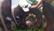Un raton laveur coincé dans une roue