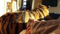 Se reveiller avec son tigre dans son lit