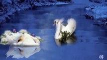 Yo Yo Ma And Lil' Buck Do 'The Swan' in Beijing - video