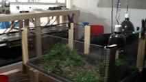 #290: Photo Bioreactor Planning in the Fishroom to Feed Live Daphnia Culture - Update Monday