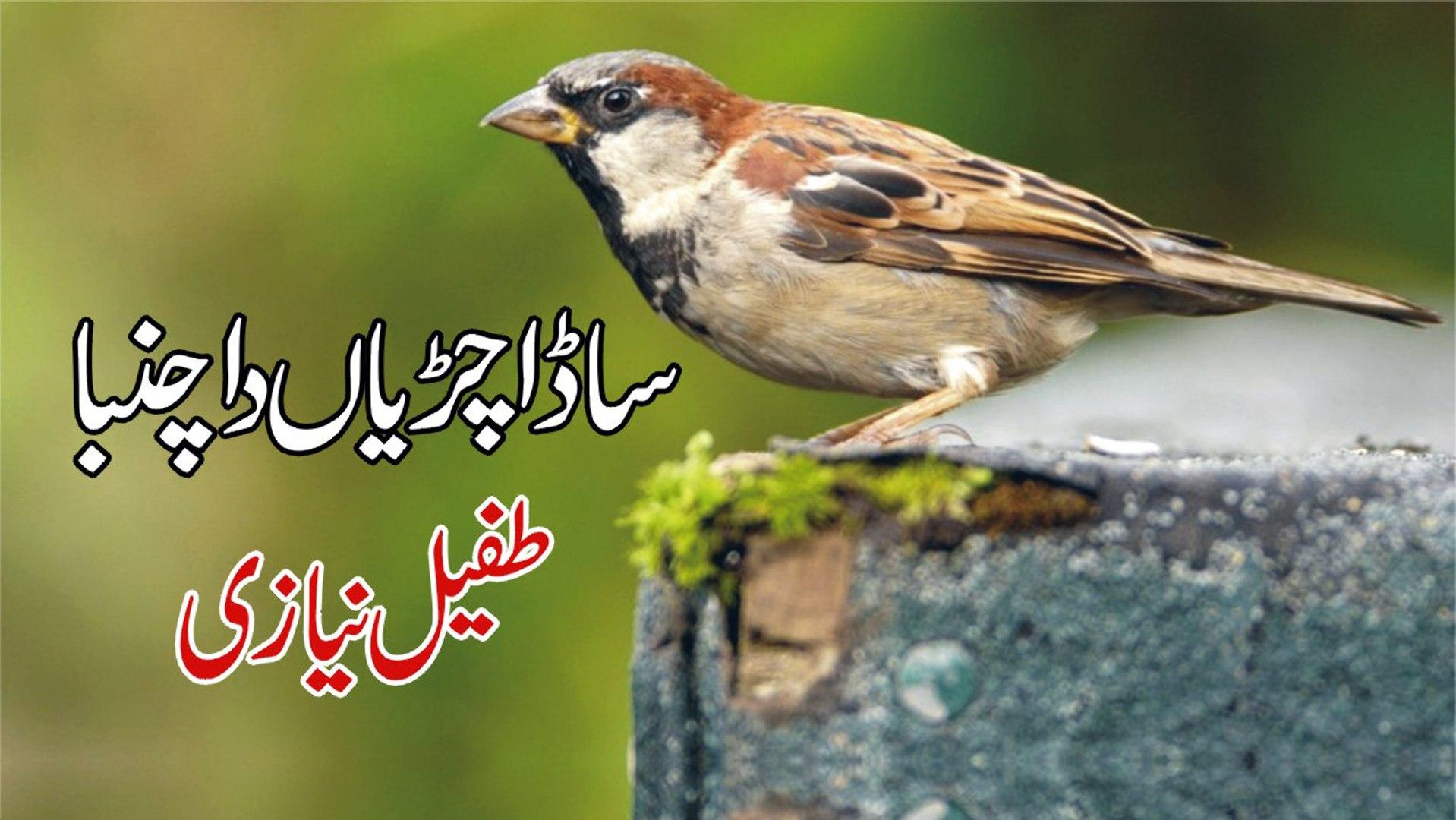 Sada Chiryaan Da Chamba - Tufail Niazi - Punjabi Folk Song - With Lyrics