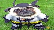 САМЫЕ СМЕШНЫЕ СОБАКИ 2015 - Лучшая Подборка #5 - Прикольные и Весёлые Собаки - ДО СЛЁЗ