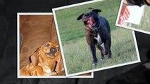 САМЫЕ СМЕШНЫЕ СОБАКИ 2015 - Лучшая Подборка #13 - Прикольные и Весёлые Собаки - ДО СЛЁЗ