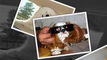 САМЫЕ СМЕШНЫЕ СОБАКИ 2015 - Лучшая Подборка #17 - Прикольные и Весёлые Собаки - ДО СЛЁЗ