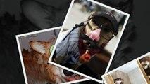 САМЫЕ СМЕШНЫЕ СОБАКИ 2015 - Лучшая Подборка #33 - Прикольные и Весёлые Собаки - ДО СЛЁЗ