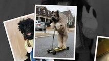 САМЫЕ СМЕШНЫЕ СОБАКИ 2015 - Лучшая Подборка #34 - Прикольные и Весёлые Собаки - ДО СЛЁЗ