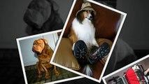 САМЫЕ СМЕШНЫЕ СОБАКИ 2015 - Лучшая Подборка #59 - Прикольные и Весёлые Собаки - ДО СЛЁЗ