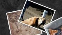 САМЫЕ СМЕШНЫЕ СОБАКИ 2015 - Лучшая Подборка #63 - Прикольные и Весёлые Собаки - ДО СЛЁЗ