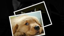 САМЫЕ СМЕШНЫЕ СОБАКИ 2015 - Лучшая Подборка #87 - Прикольные и Весёлые Собаки - ДО СЛЁЗ