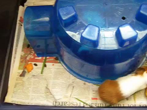 Baby Guinea-Pigs