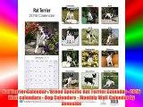 Rat Terrier Calendar - Breed Specific Rat Terrier Calendar - 2016 Wall calendars - Dog Calendars