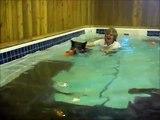Jiggs learns to swim