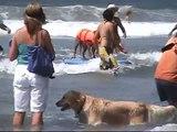 Surf dog Ricochet Surfing Helen Woodward surf a thon  2009