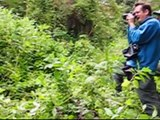 Mountain Gorillas in Rwanda and Uganda