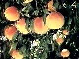 Popular Prune & Dried fruit videos