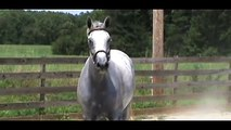 HORSE FOR SALE  -  Popeye-K Mare Cara Bella-K  -  August 2012
