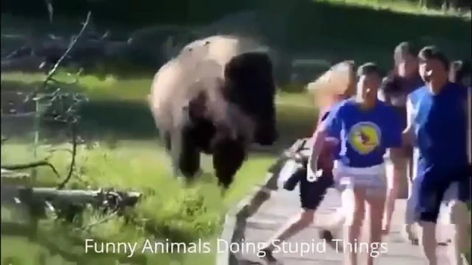 Смешные животные. Смешное видео, прикол, юмор, ржака Funny Animals, Cats, Dogs