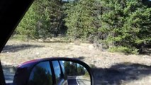 BC road trip, deer (little fawn) sighting, Kalan Wi music, for littlefawn60