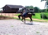 APHA bay overo 3 year old mare