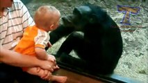 Cute animals kissing babies   Funny animal & baby compilation