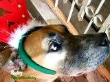 Des animaux chantent Jingle Bells