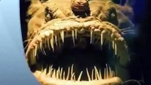 poissons abyssaux des profondeurs de tous les océans du monde [Full Episode]