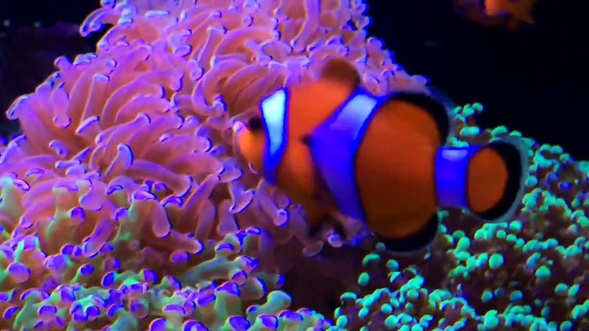 Marineland 37 Gallon Cube Reef: Observing Behavior