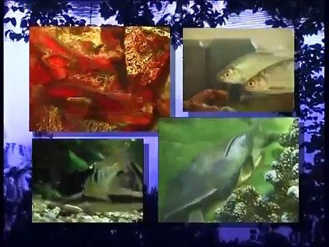 Tipps zur Haltung von Fischen