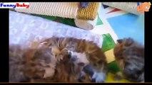 Video Funny Baby New P4 - Video Hài Hước Trẻ Em Mới P4