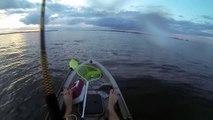 Shark Attacks Red Drum (Redfish) While Kayak Fishing