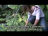 Nanotudomány a természetben (Hungarian subtitles)