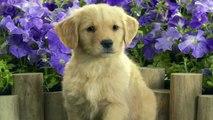 funny dog videos,dog facts, dog finder, dog image, dog images, dog photo, dog photos,