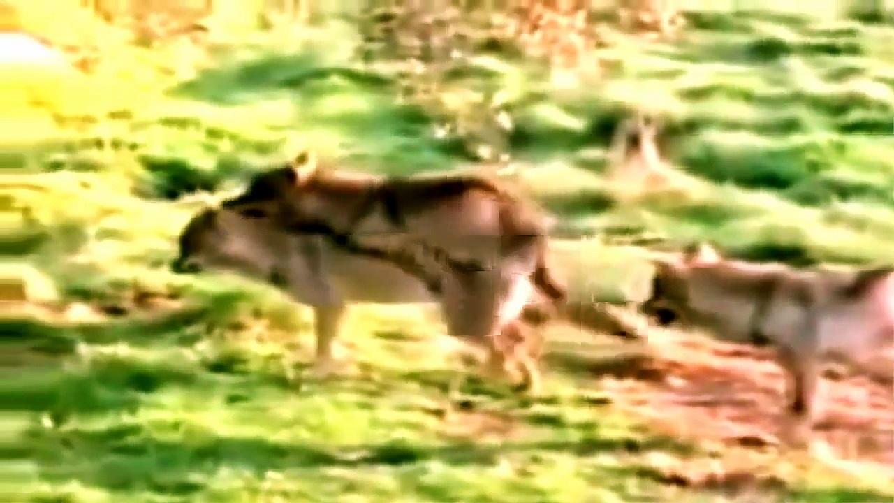 Tiere Paarung Videos
