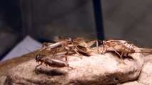 Crickets chirping