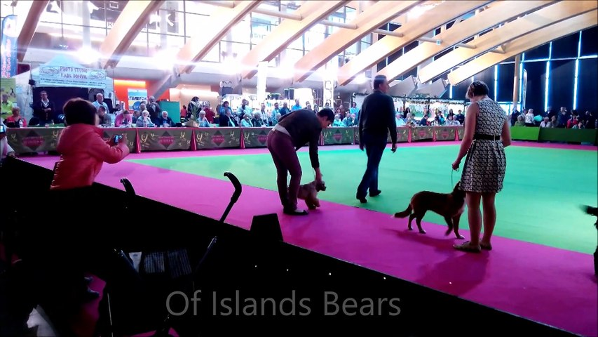 Of Islands Bears