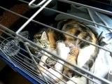 video JADE chatte errante sauvée de dehors par ABCE avec ses 5 bb