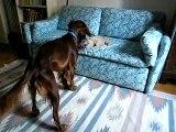 animali divertenti - ally simil paperissima cane e gatto