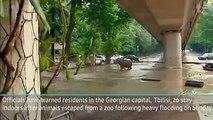 Hundreds at risk as major flood hits Tbilisi, Hippopotamus escaped Tbilisi Zoo