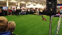 Cali K9® Protection Training - IPO, Dog Sport - Bay Area Pet Expo 2011