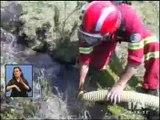 40 hectáreas resultaron afectadas por incendio en el Parque Nacional Cajas