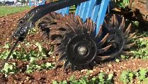Désherbage mécanique du colza - La houe rotative