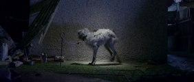 Un chien chante I Will Survive dans cette campagne pour la protection des animaux