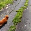 Quand tu fais semblant de tomber devant ton chien mais que celui-ci est un connard